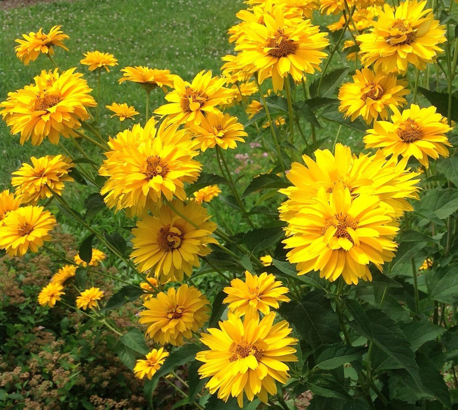 Beautiful blooms in the garden...