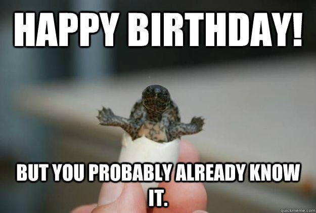 Funny Mom Birthday Meme : Funny turtle birthday google zoeken birthday wishes pinterest