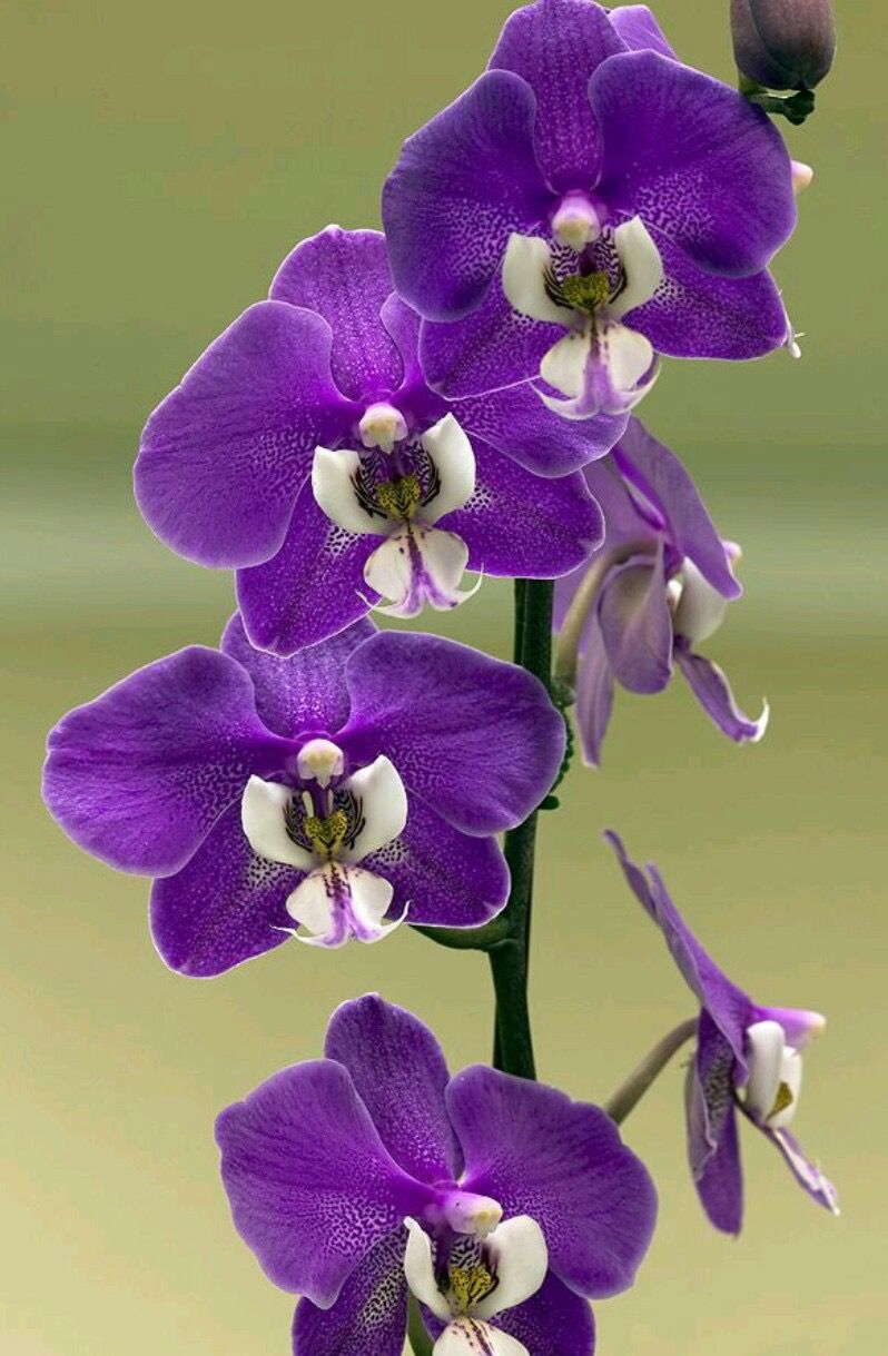 Pin by lucille nuanes on flowersorchids pinterest orchid and