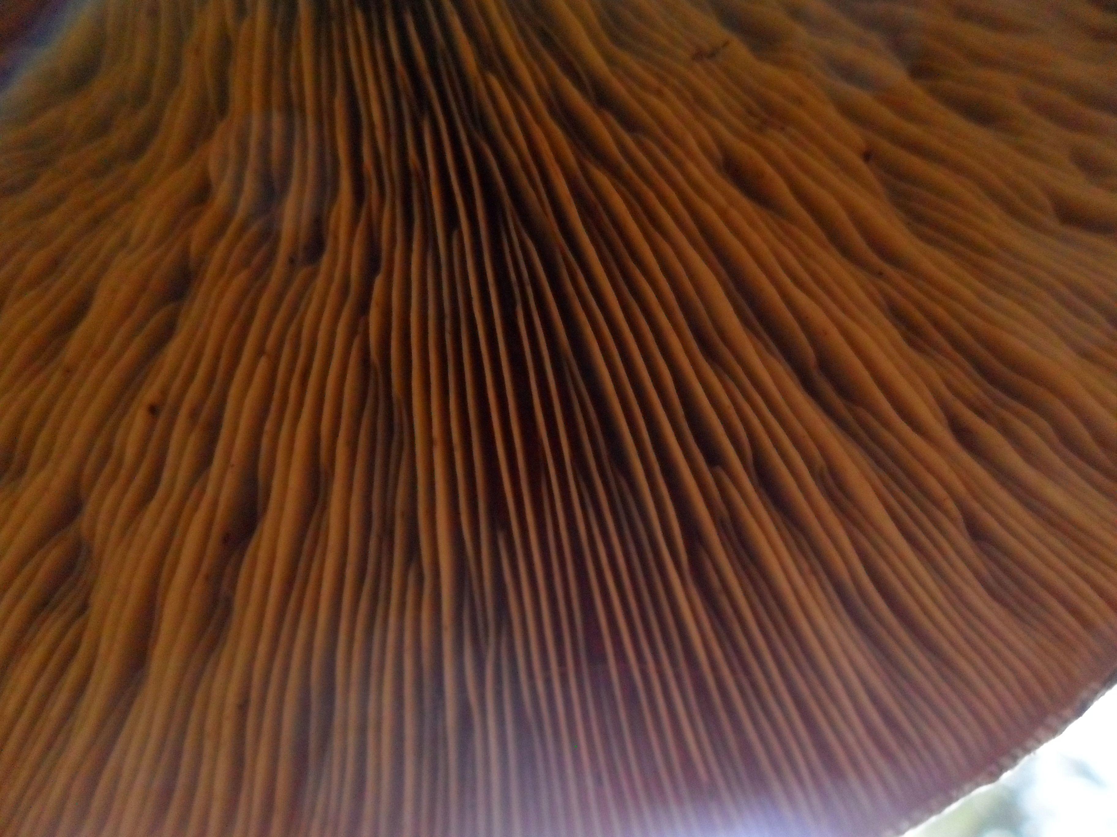 de zaadgleuven van een paddenstoel