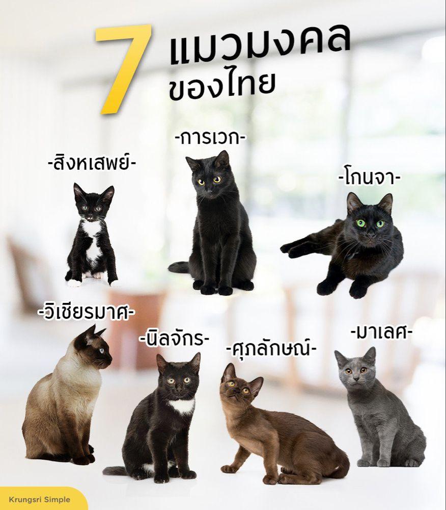 ป กพ นโดย Prasit Tangjitrapitak ใน Thai Cat แมวไทย