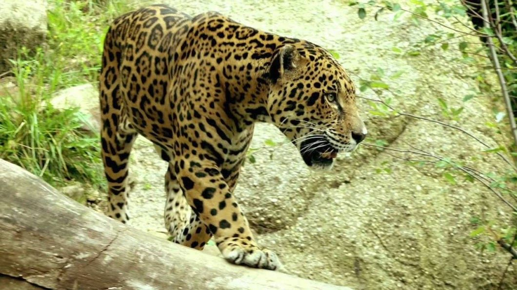 Pin by Hunny Adam on Wildlife Animals Rainforest animals
