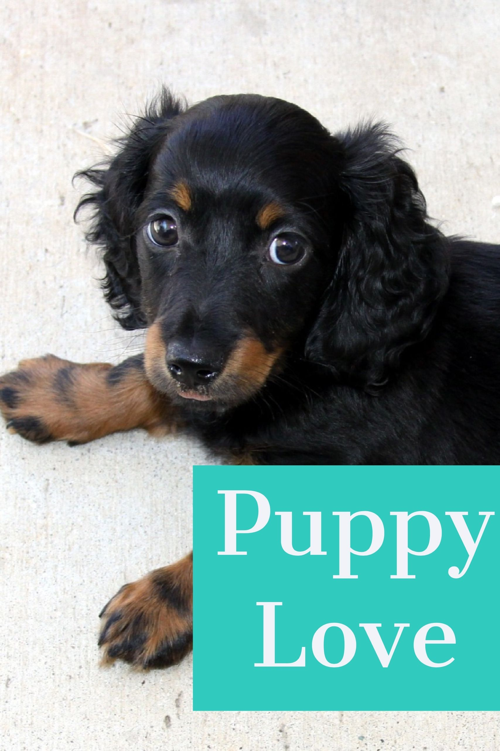 Have you had your puppy lick yet today? (scheduled via
