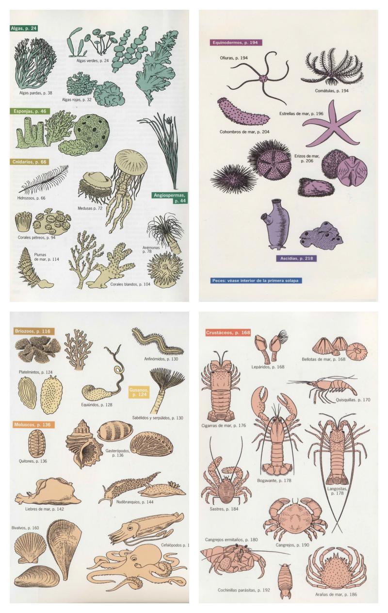 Flora y fauna submarina del mar Mediterráneo | Diving | Pinterest