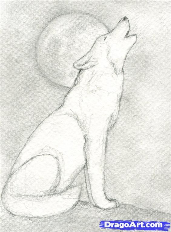 Wolves to draw step 9 how to draw a howling wolf