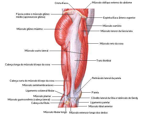 Aula de Anatomia | Músculos da Coxa | Anatomia | Pinterest ...