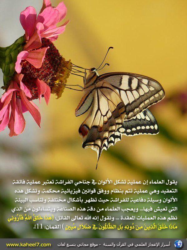 لوحات مودرن فراشات ذهبى سفير ارت للديكور White Butterfly Butterfly Wall Butterfly