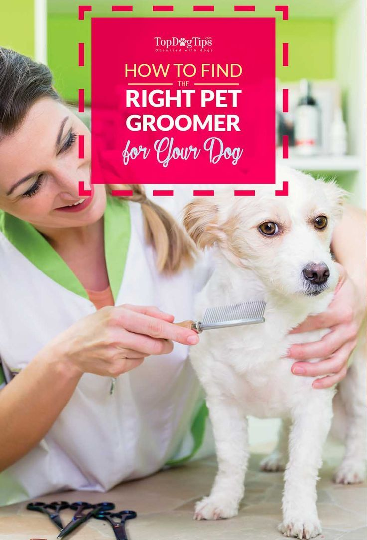 Let S Talk How To Find The Right Dog Groomer Pet Grooming Near
