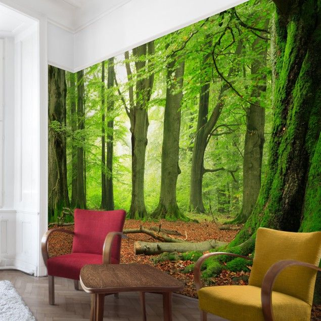waldtapete vliestapete mighty beech trees fototapete. Black Bedroom Furniture Sets. Home Design Ideas