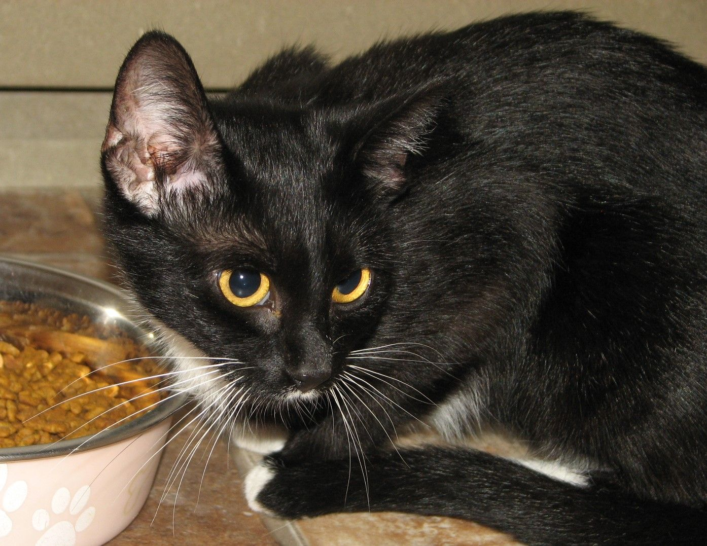 Michi (tuxedo female) Adopted (With images) Kitten