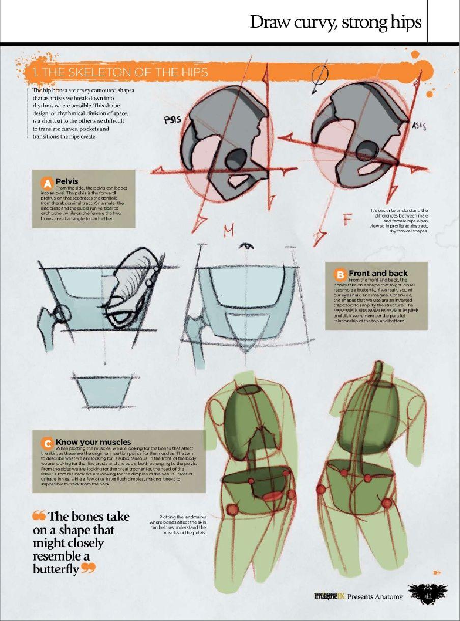 Ron Lemen Anatomy! | Human anatomy drawing, Figure drawing ...