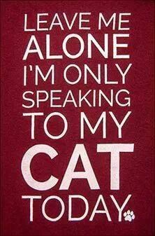 leave me alone   CATS! CATS! CATS!   Cats, Crazy cats, Cat