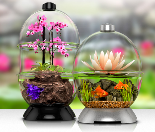Wonder bubble fabulous mini pink orchid with beautiful for Bubbles in betta fish tank