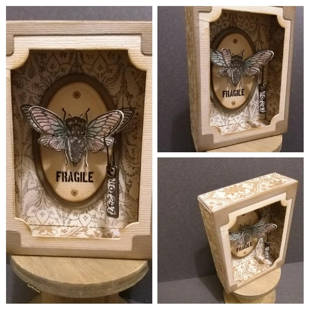 """Lynn Bean on Instagram: """"The curio box just had to have a bug  😉.#tatteredrose #fromlynnsboxroom #timholtz #st… in 2020   Tim holtz sizzix,  Tim holtz, Tim holtz mixed media"""