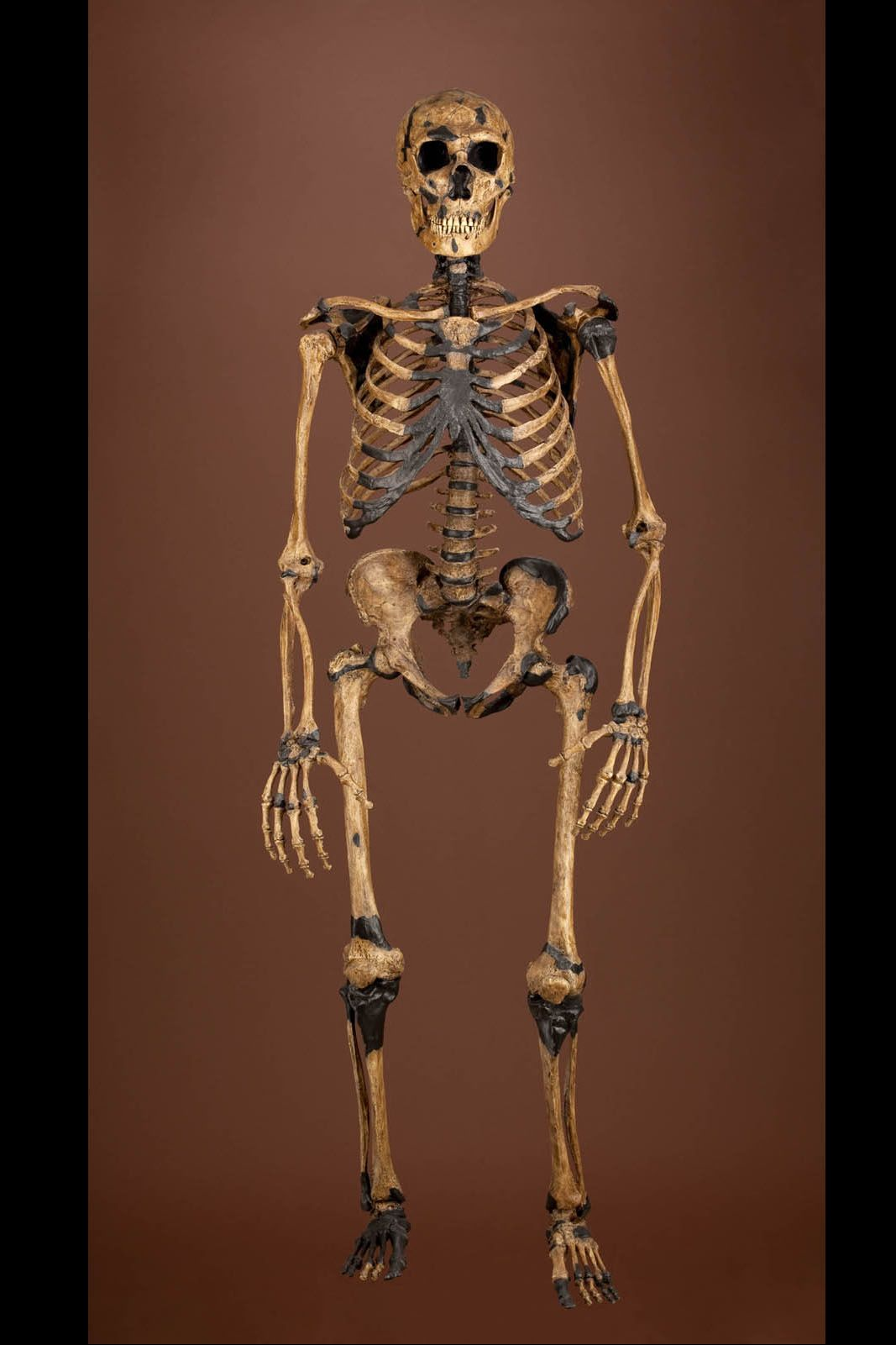 how there's a bit of neanderthal in all of us: dna link to cavemen, Skeleton