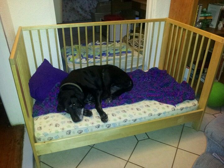 re purpose a crib into a dog bed great for older dogs who can 39 t get into chairs and need to be. Black Bedroom Furniture Sets. Home Design Ideas
