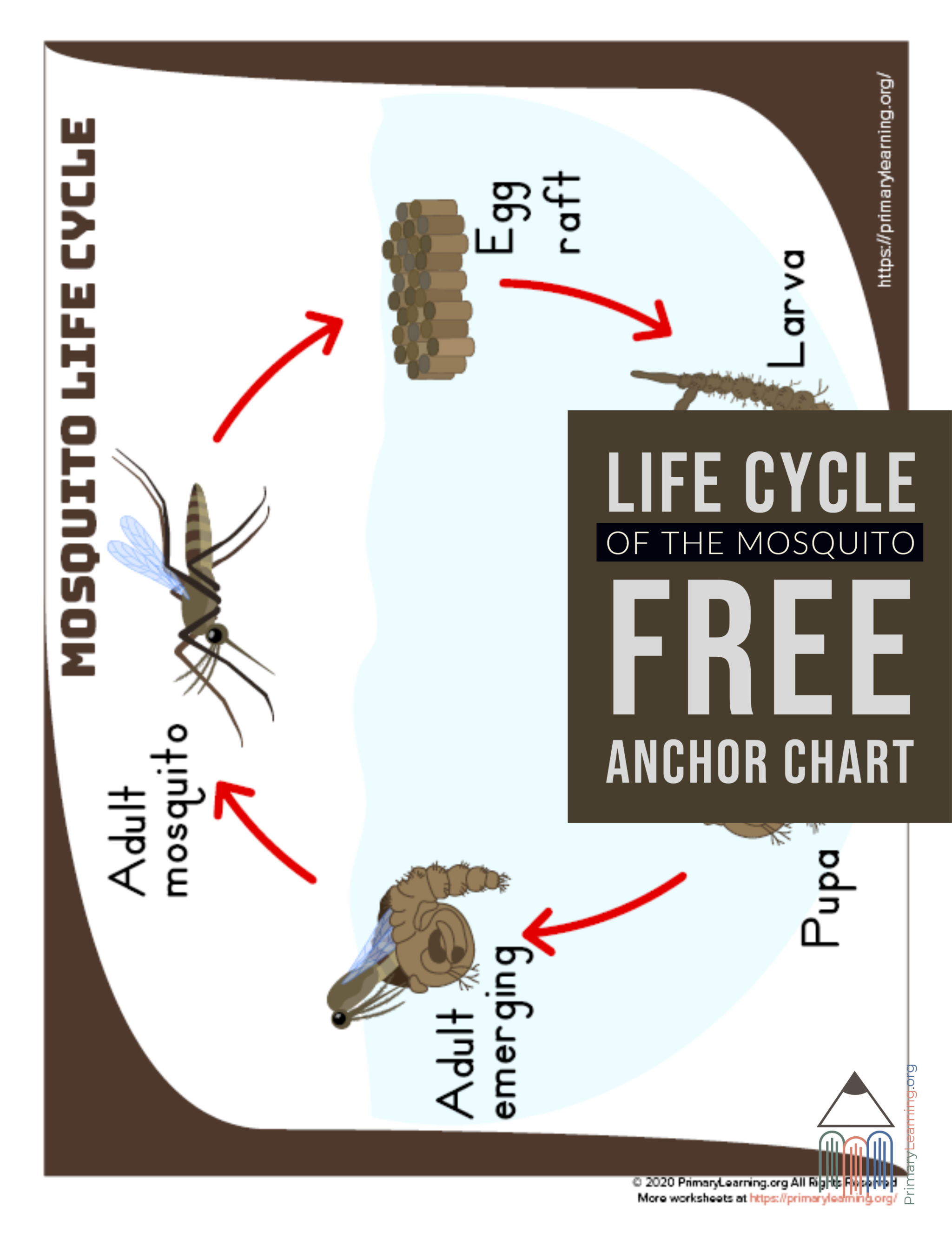 Mosquito Life Cycle Anchor Chart In