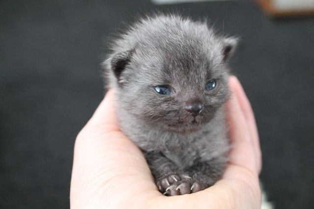 Lost Newborn Kitten Stunned His Rescuers When He Began To Change Color Cute Animals Cute Cats Cute Cats And Kittens
