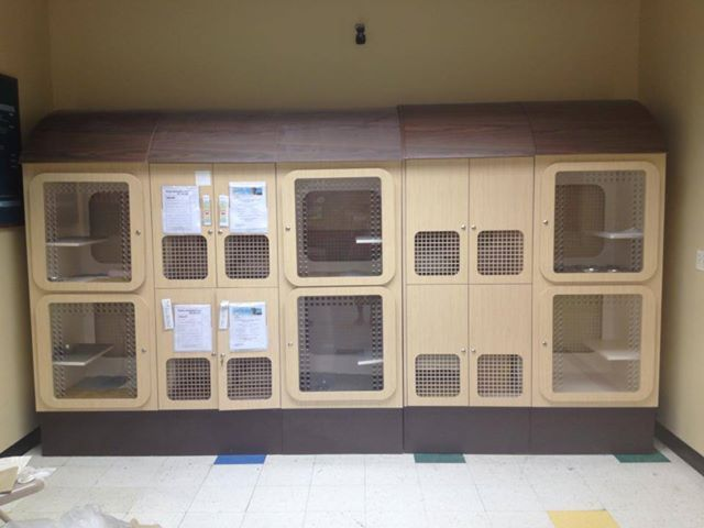 how to build a cat condo for animal shelter Petco