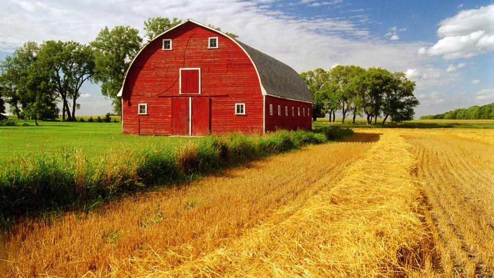 beautiful barn Vector