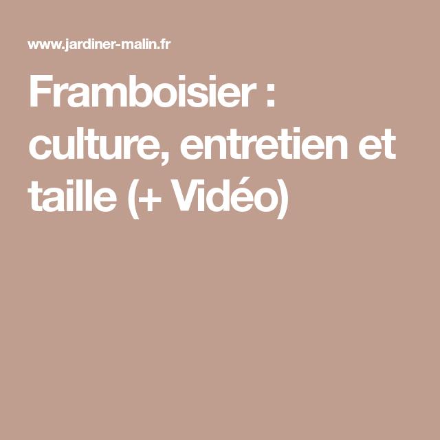 Framboisier : culture, entretien et taille (+ Vidéo ...