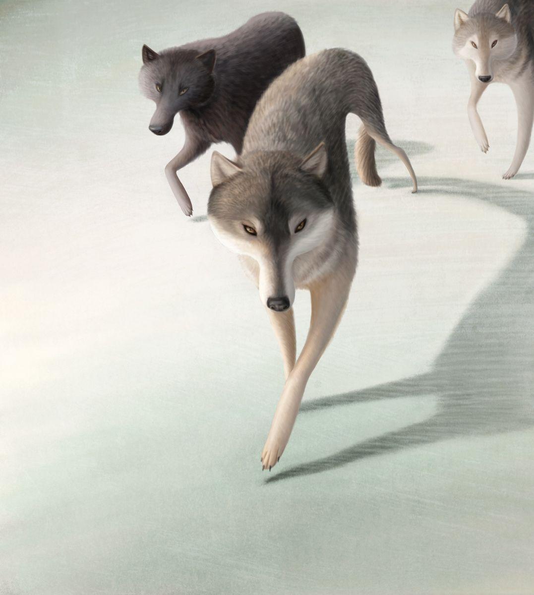 The Art Of Animation, Varya Kolesnikova -...