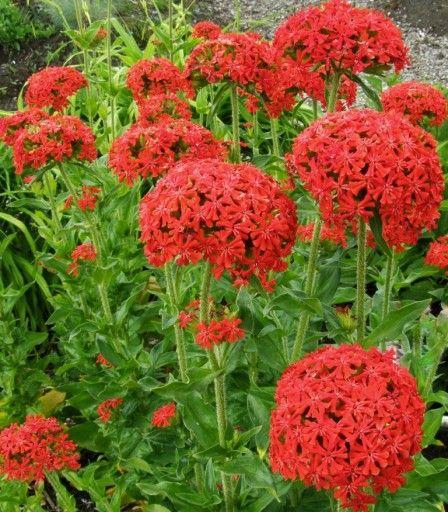 Pin by Martina Sýkorová on Flowers in my little garden in