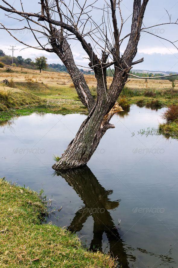 Landscape - PhotoDune Item for Sale
