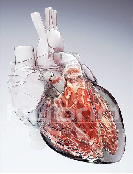 Glass Heart - illustration made for the 2009 Medical Illustration ...