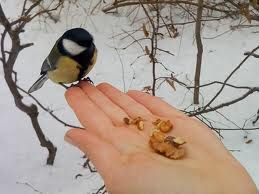 tumblr bird feeders - Google Search