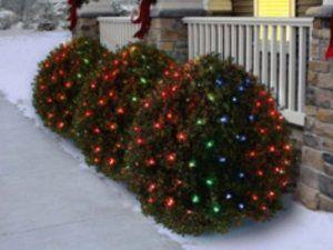 Christmas Bush Lights.Pin On Holiday Tme