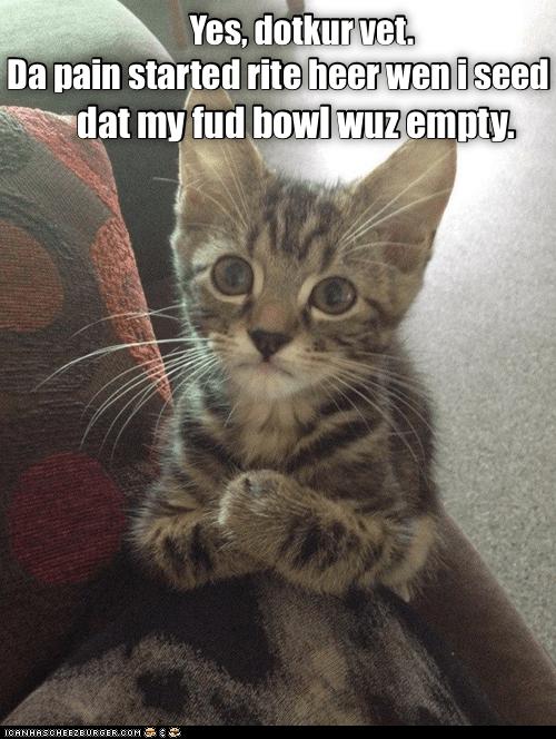 Oh Those Careless Parental Hoomins Cute Cat Memes Funny Animal Quotes Animal Jokes