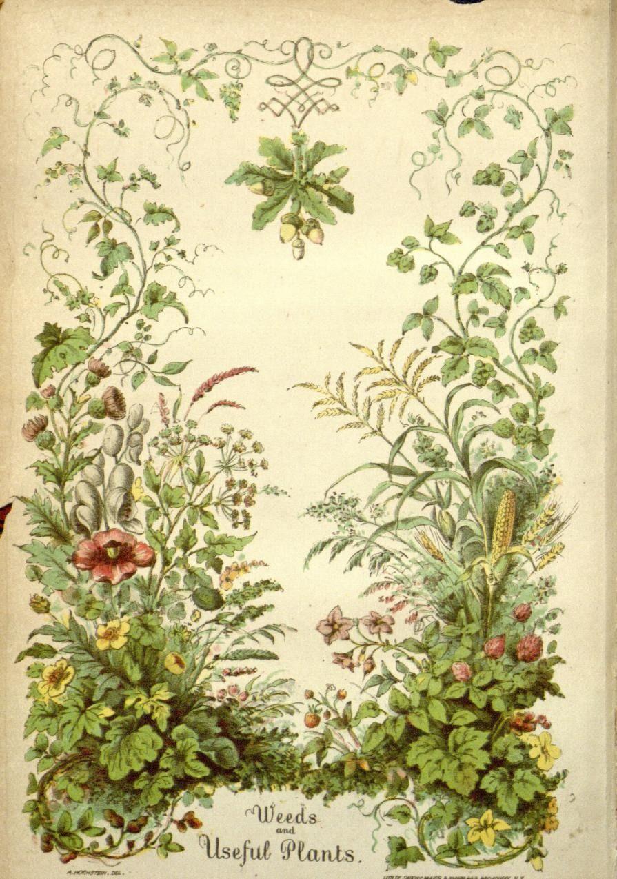 Ботаника картинки для оформления