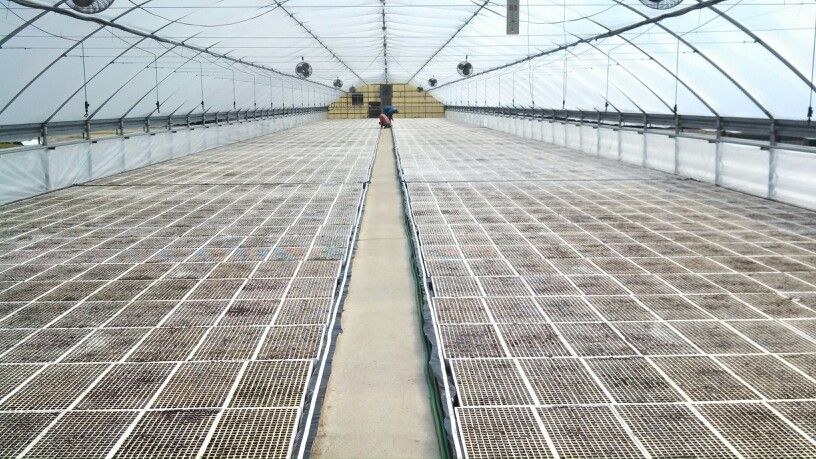 Just seeded tobacco greenhouse