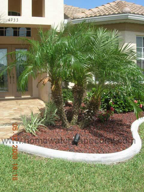 Pygmy Date Palm Tree Tree Garden Design Palm Trees Garden Palm