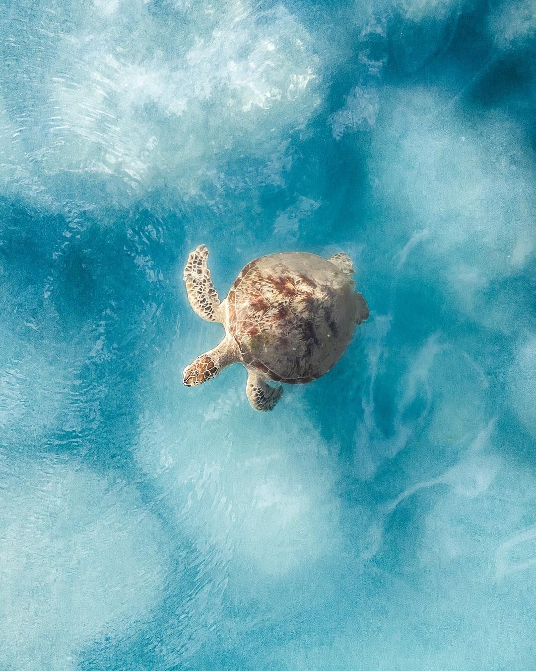 sea turtle Turtle, Cute turtles, Beautiful locations