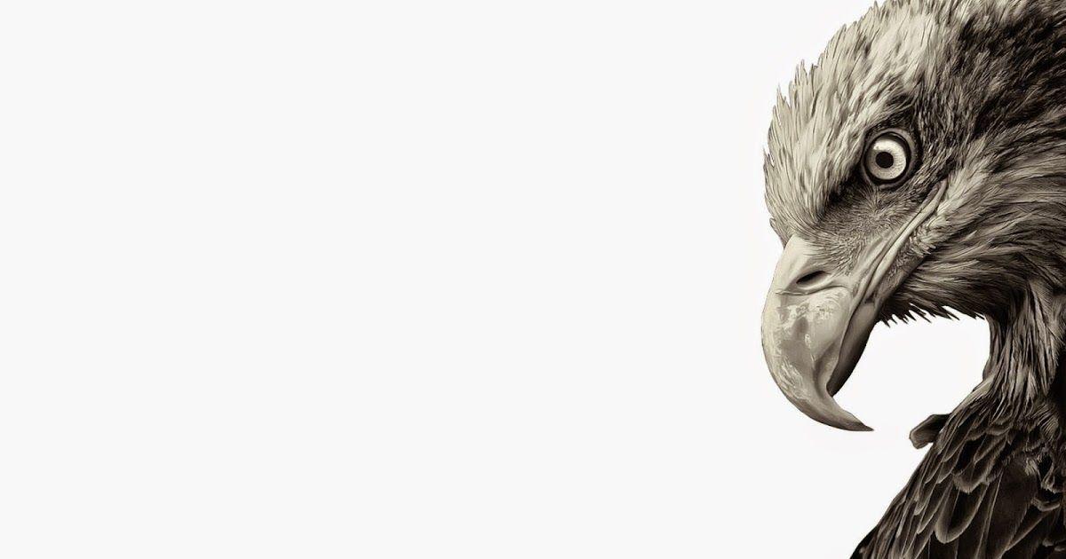 14 Wallpaper Bergerak Burung Elang Unduh 102 Wallpaper Bergerak Burung Elang Paling Keren Elang Gif Gambar Animasi Animasi Bergera Burung Burung Elang Elang
