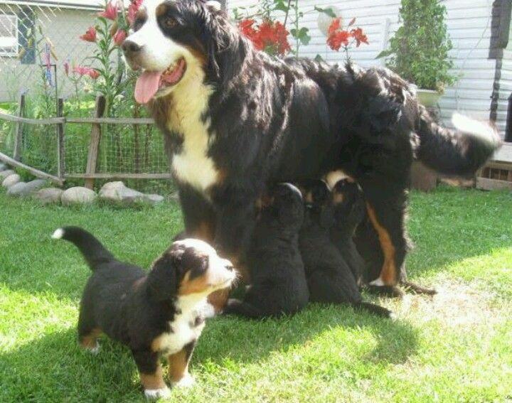 Big 2011 Honden Dieren