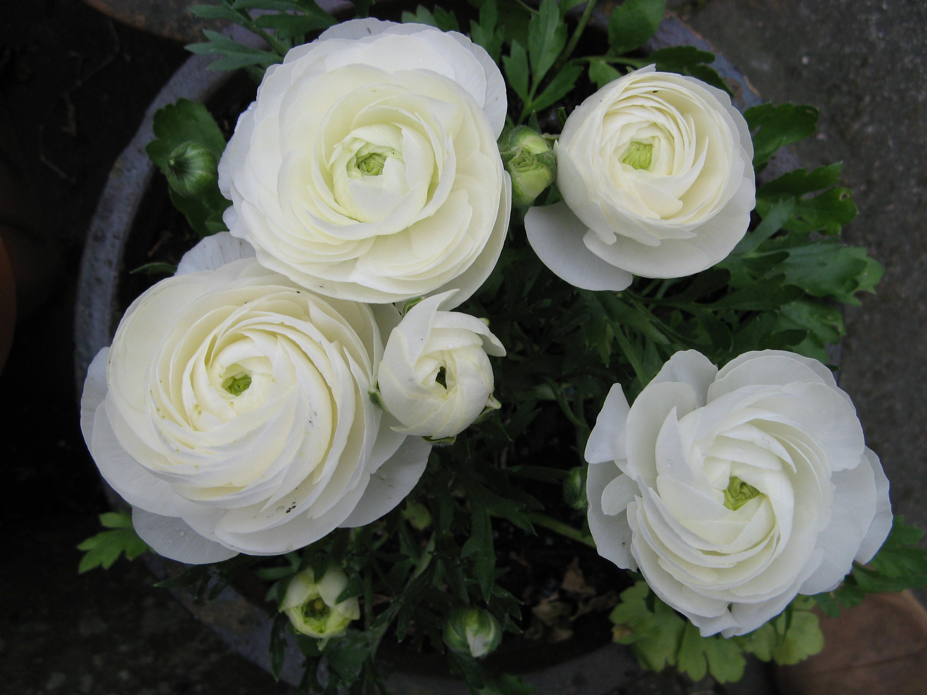 It Coincided With Lots Of White Flowers Appearing In The Garden I