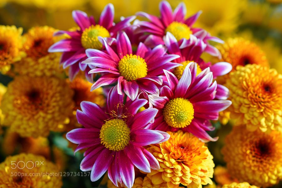 Autumn flowers  by mayorovnht