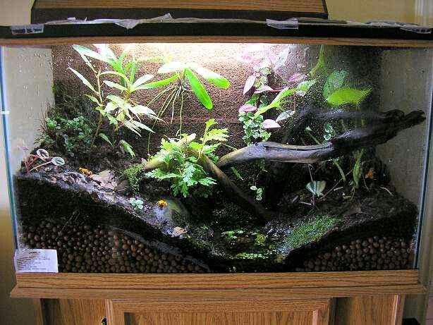 Fish tank terrarium - Fish Tank Terrarium House Idea's *DIY* Pinterest Fish Tank