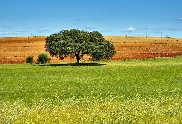 Alentejo Alentejo Fotos Regioes De Portugal