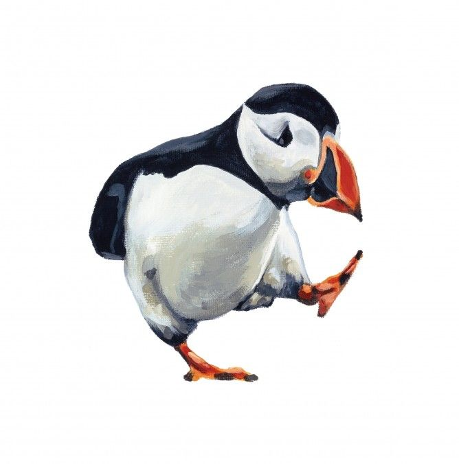 Pacing Puffin by Anne Marie Dahlstrom