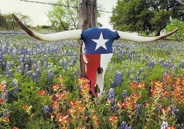 Texas Usa Texas Decor Cow Skull Decor Texas Bluebonnets