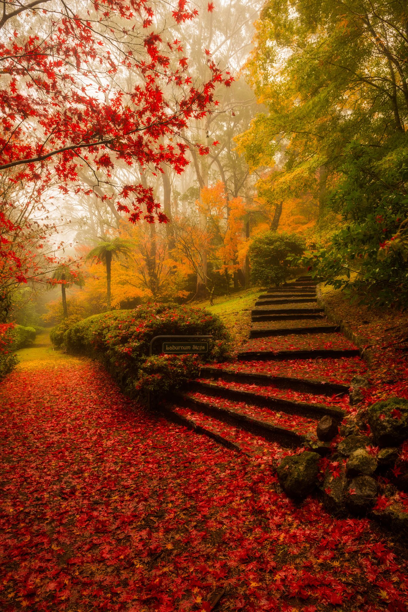 Autumn Beauty .. #nature #red #leaves #stairs #gardens #autumn ...
