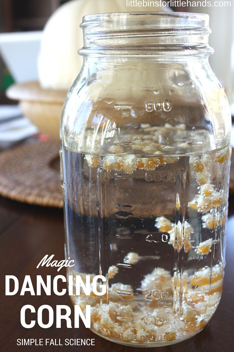 Dancing Corn Thanksgiving Science Activity Fall Experiment