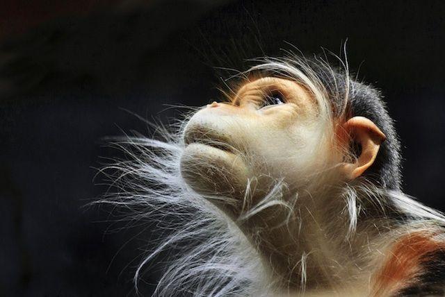 monkeys Wherecoolthingshappen Incredibly Expressive Monkey Photography