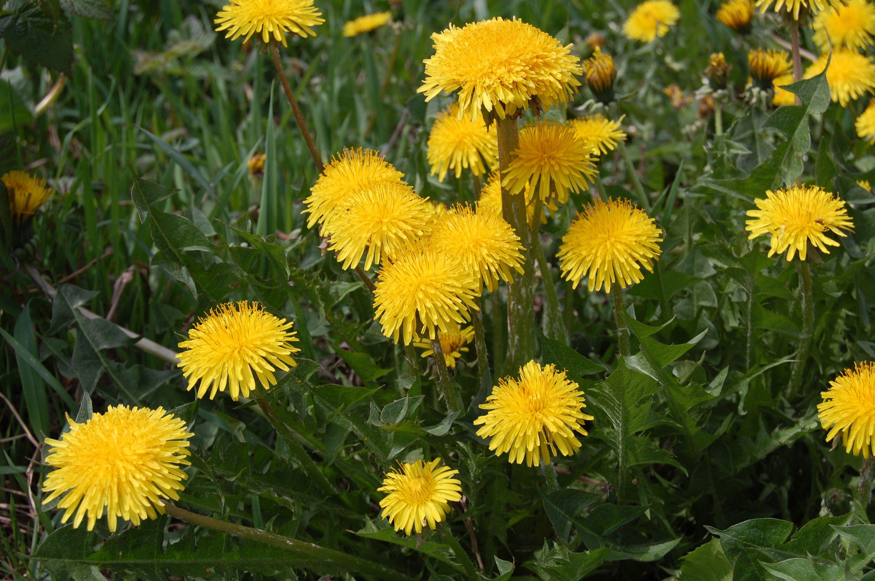 Красивые цветы фото хорошего качества   Красивые цветы ...