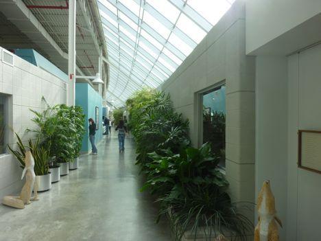 Herman Miller Greenhouse, Holland | Biophilic Design | Pinterest ...