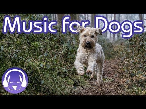 How to Relax My Dog 15 Hours of Music to INSTANTLY Calm